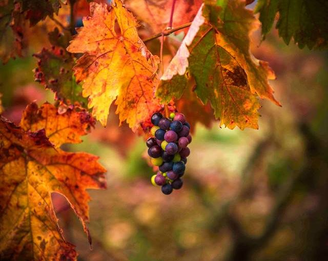 Descubriremos los cromatismos otoñales de la Rioja Alta en la excursión del 20 de Octubre
